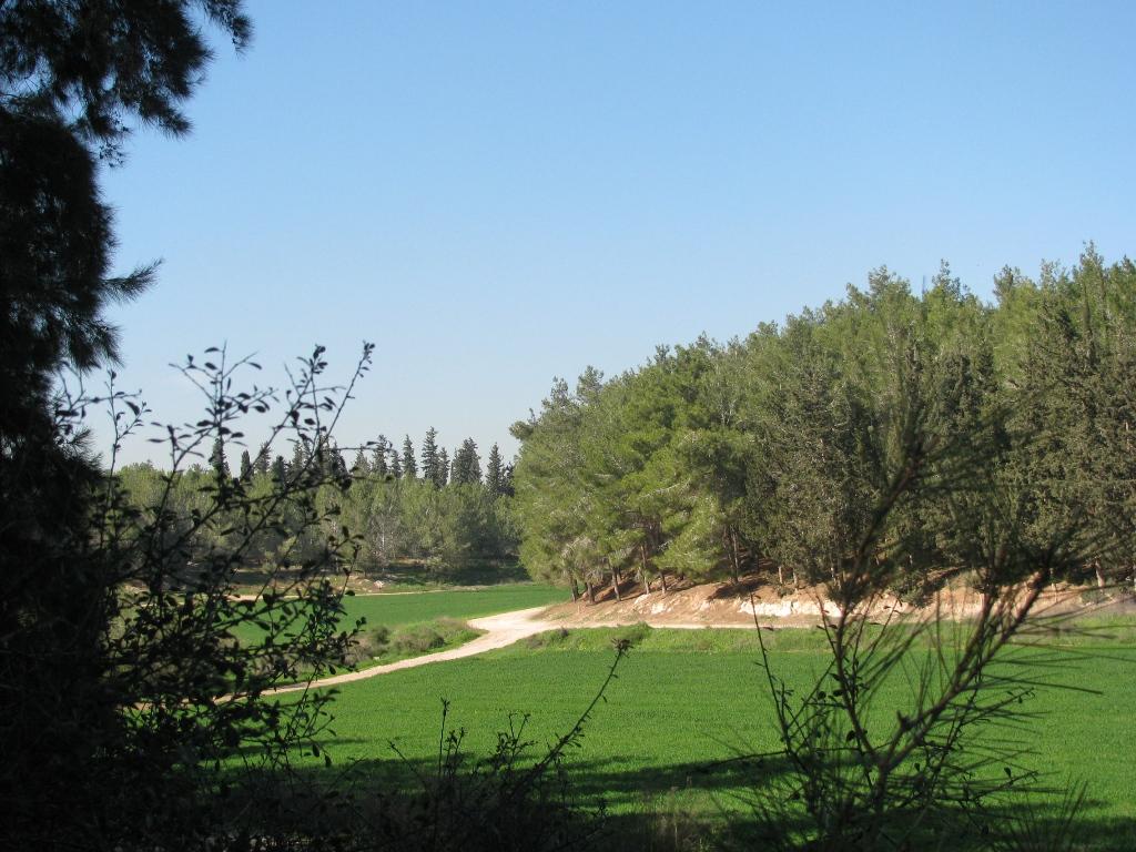 PikiWiki_Israel_7085_Ben-Shemen_Forest